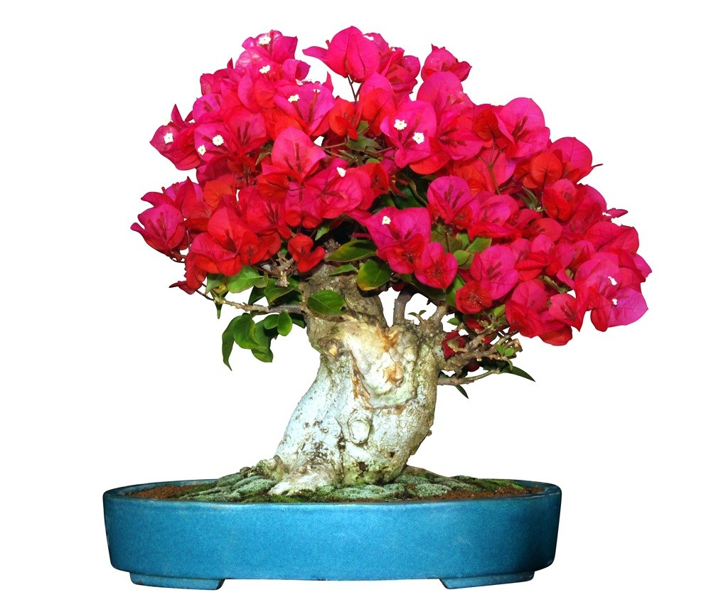 Colorful flower before background removal or clipping path service